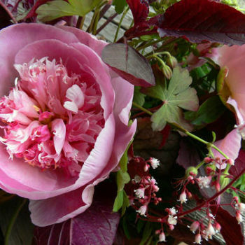 weeder's digest: peonies, part 2