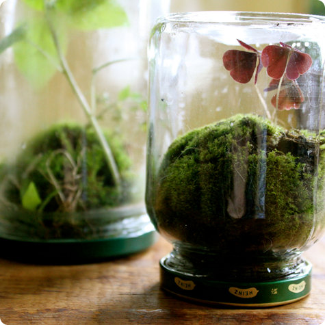 Made With Love Found Terrariums Design Sponge