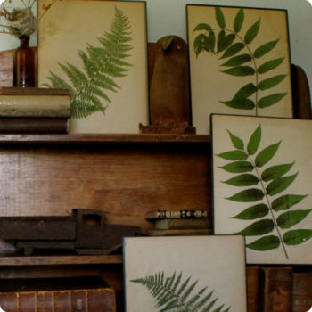 made with love: pressed botanical specimens