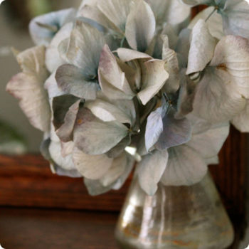 made with love: drying hydrangeas