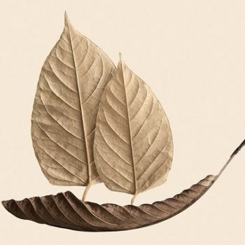 leaf prints by jeff friesen