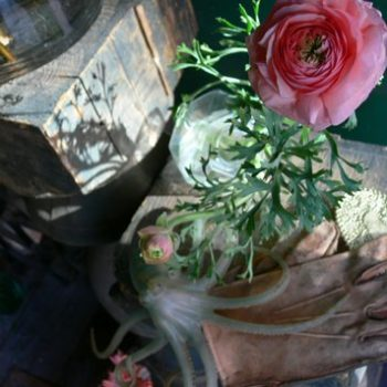 weeder's digest: a note from your local florist