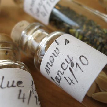 we like it wild: the seed bank