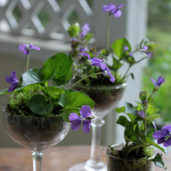 made with love: wild violet centerpieces