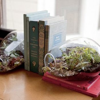 terrariums in the ny times + the botany factory