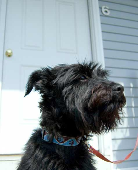Our Favorite Dogs In Homes Part 2 Design Sponge
