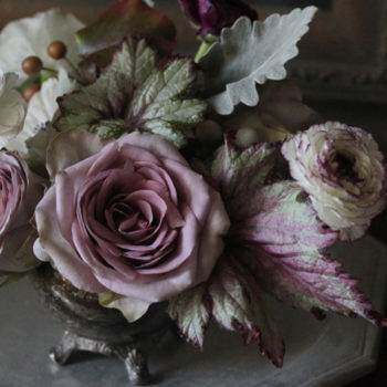 begonia rex and flowers: a love story