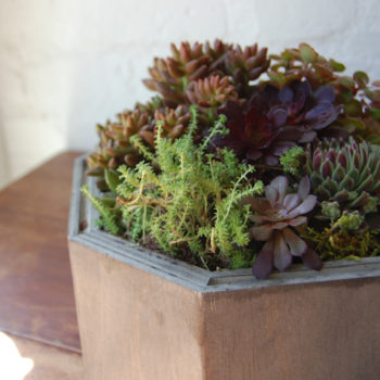 we like it wild: recycled fixture planters