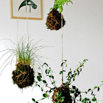 "diy project: ""kokedama"" string garden"