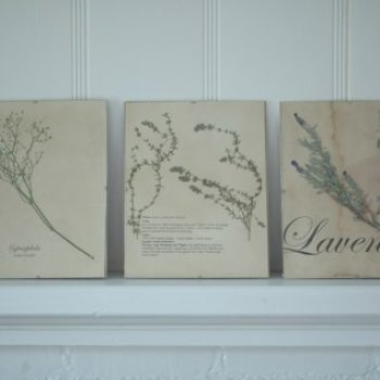diy project: dried flowers and herbs