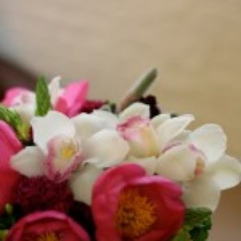 flowers a-z: o is for orchid