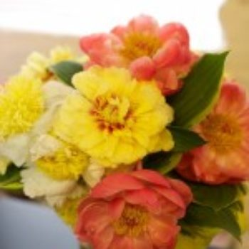 flowers a-z: p is for peony