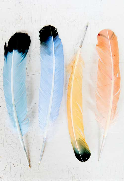 Diy project feather pen pal stationery kit design sponge for Where can i buy feathers for crafts