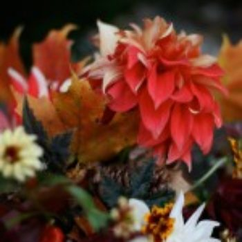 outside in: fall foliage & flowers