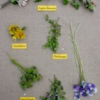 small measures: edible spring wildflowers
