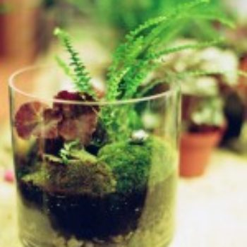 Living Gifts: Terrarium Workshop