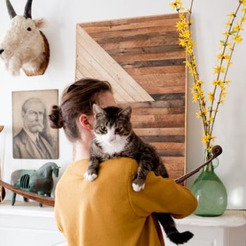 Our Favorite Cats at Home