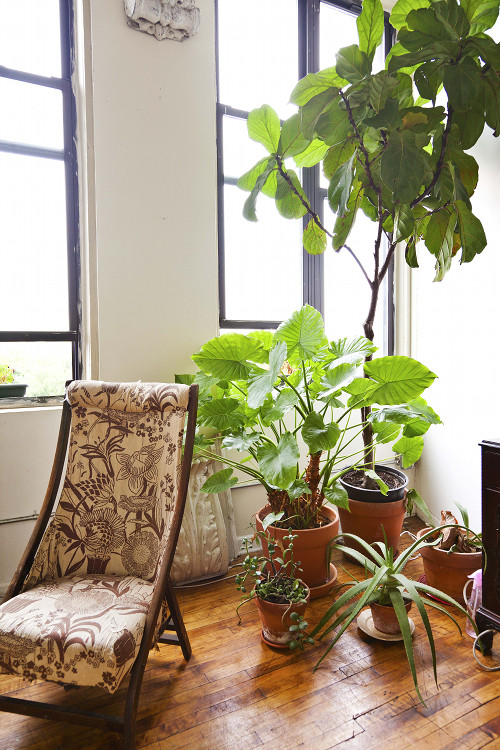 Image Above Another From Ariel Dearie S Plant Filled Apartment The Chair Is An Old Sewing 20s Cornice Pieces Were Salvaged By