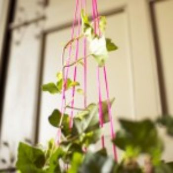 Hanging a Potless Plant with a Pop of Color