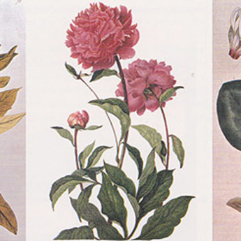 Inspiration Library: The Practice of the Gardener's Art