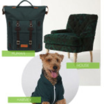 Human/House/Harvey: Forest Green