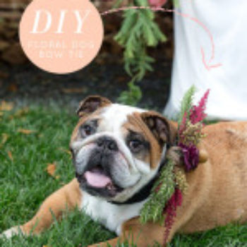 Wedding DIY: Dog Bow-Tie
