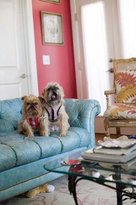 Home Ec How to Protect Your Furniture From Pets DesignSponge