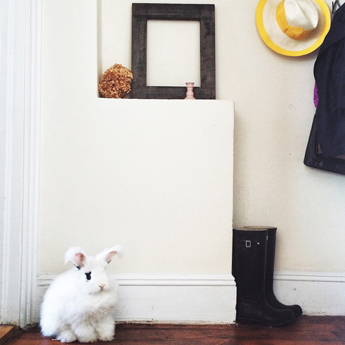 On Cranberry Street, A One-Bedroom Apartment For a Foodie and Her Bunny