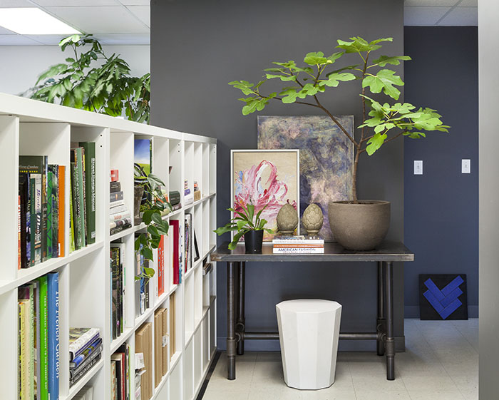 caring for indoor plants during winter