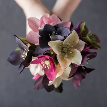 Paper Hellebore Tutorial by Kate Alarcón