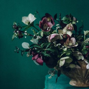 Winter Hellebores by Swallows & Damsons