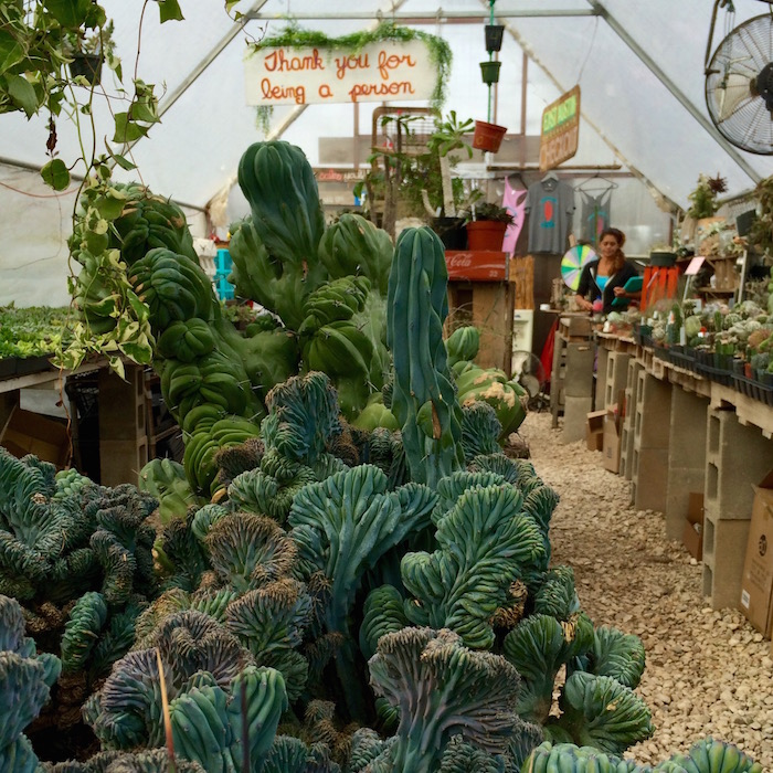 Shop: East Austin Succulents