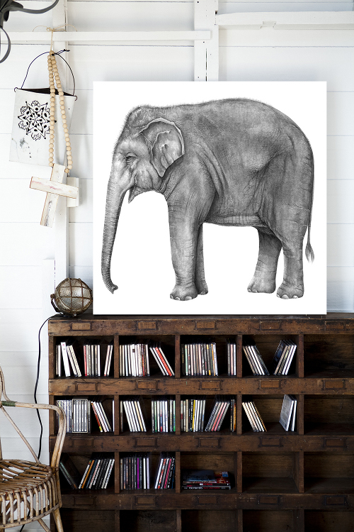 Located on the northern beaches of Sydney lives Alice Flynn and her beloved Penny Farthing painting of an elephant that she coined Henry. He resides in the family boathouse above an aged wood shelving unit.