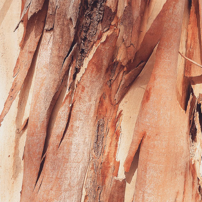 Natural Pattern and Texture Feeds to Follow on Instagram on Design*Sponge