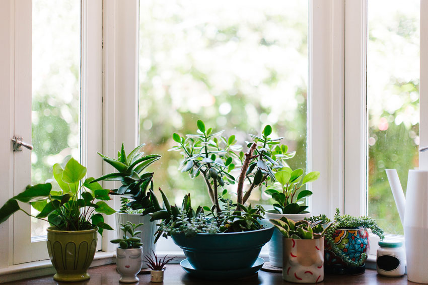 A Collection Of Pots And Plants Adorn The Kitchen Sill On Design*Sponge