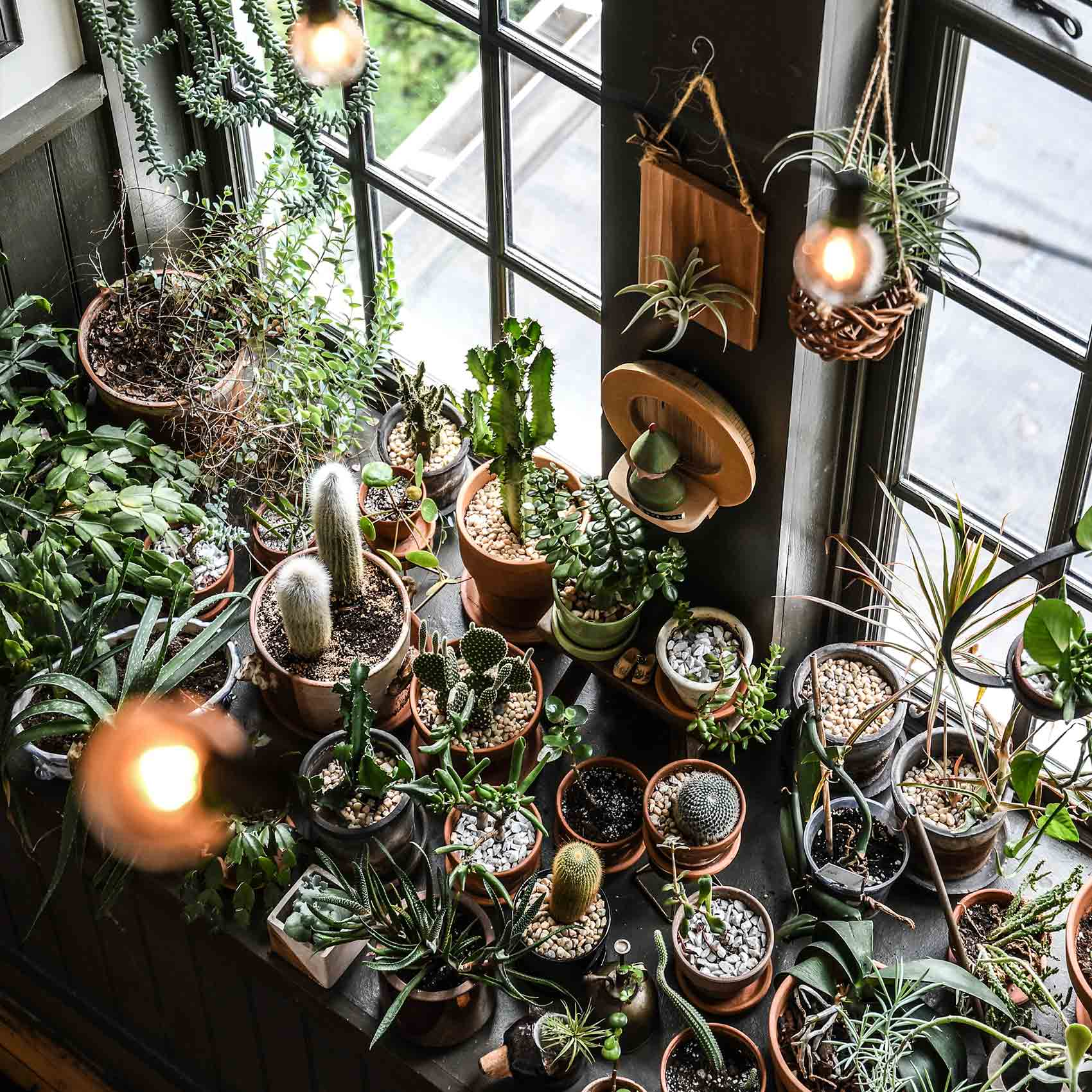 5 Tips for Keeping Houseplants Alive this Winter, Design*Sponge