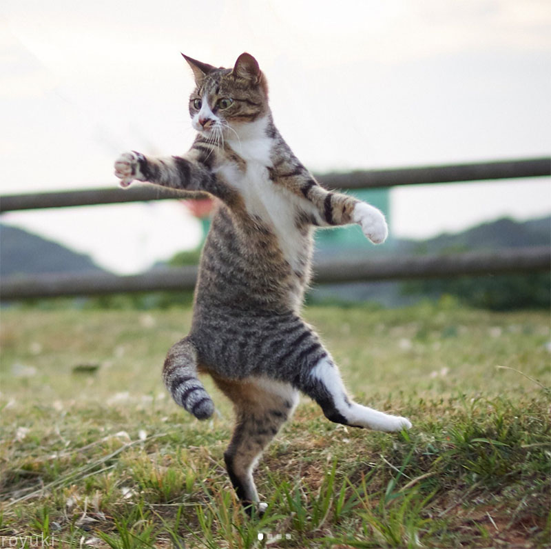 Two Things I Love Cats Jumping For Joy Elena Boils