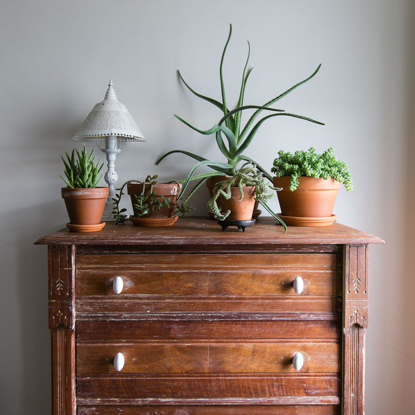 A Revamped Vintage Dresser Serves For Storage And A Plant Display On Design*Sponge