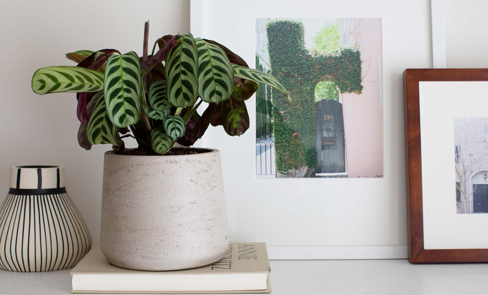 10 Pet-Safe Houseplants, Design*Sponge