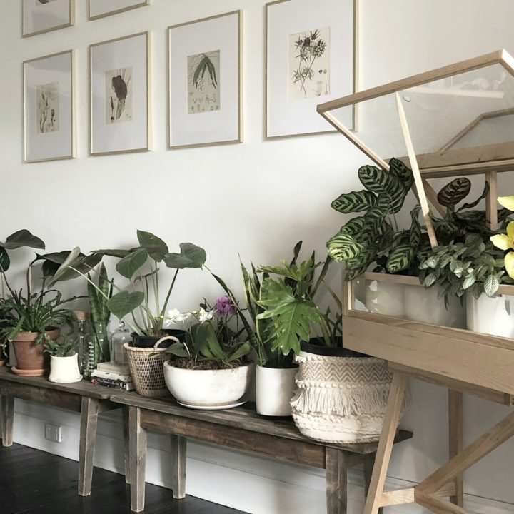 In Australia, A Florist & Family Find Healing in A 1902 Home