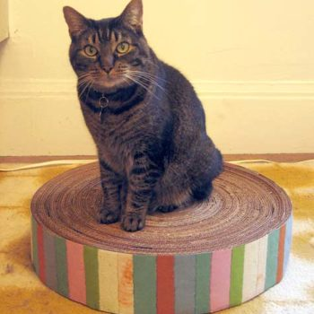 Top 20 DIY Projects of All Time: #20 Recycled Cardboard Cat Scratcher